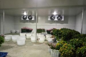 Kho lạnh bảo quản hoa tươi giá rẻ