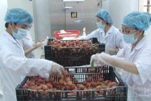 Lắp đặt kho lạnh bảo quản nông nghiệp cho vải thiều
